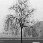 quai_Rimbaud